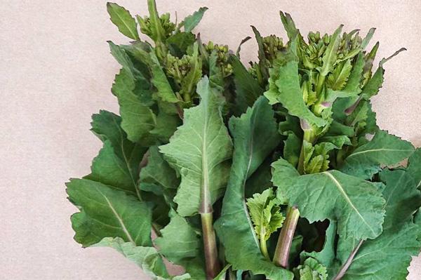無肥料・自然栽培あさひ自然農園ののらぼう菜