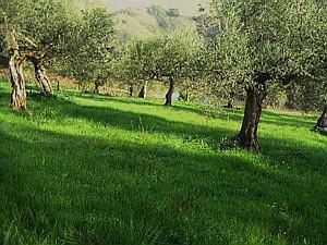 アサクラオイルの農園