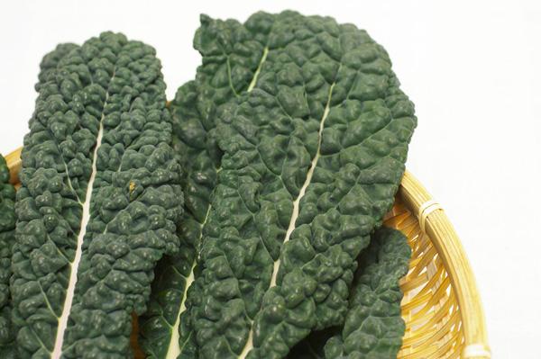無肥料・自然栽培黒キャベツ