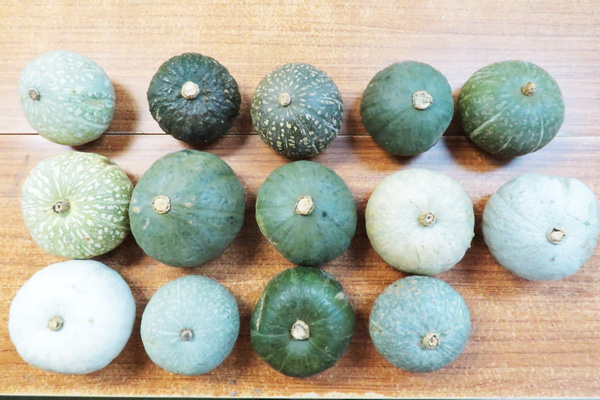 無肥料・自然栽培ほっこり南瓜いろいろな外観のものがあります。
