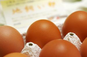 地飼いこがね卵