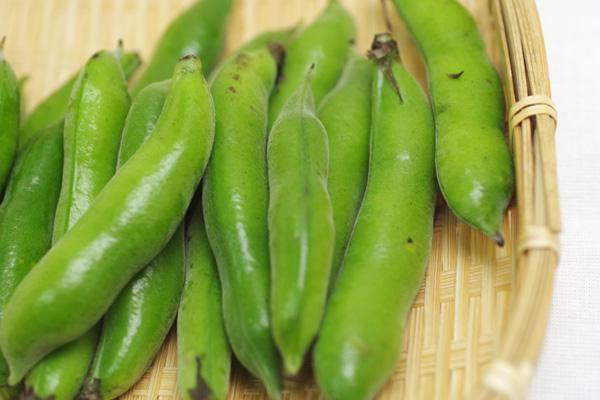 無肥料・自然栽培小林元さんの赤そら豆