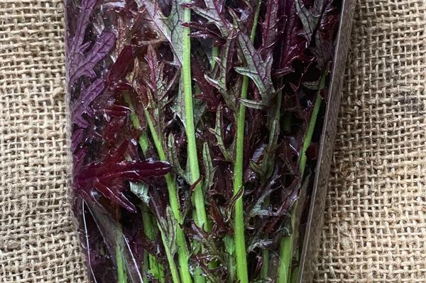 無肥料・自然栽培のハイツ野菜研究部の赤からし水菜