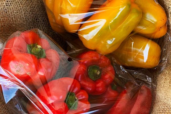 無肥料・自然栽培ハイツ野菜研究部のパプリカ