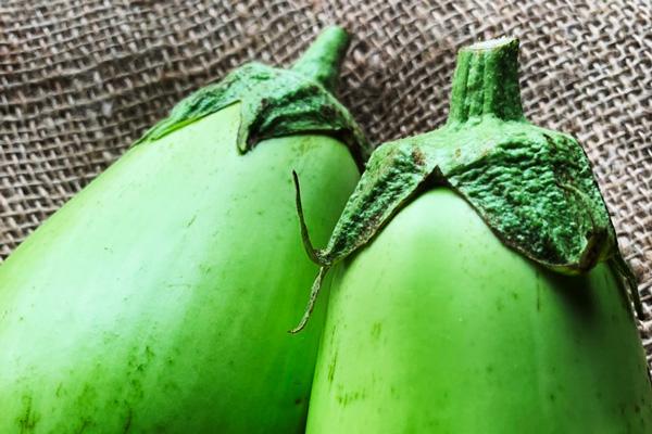 無肥料・自然栽培ハイツ野菜研究部の白丸茄子