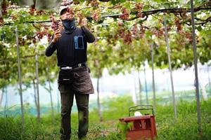 HANDOVER FARMの葡萄園