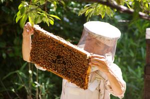 はちまつ養蜂農場の松本さん