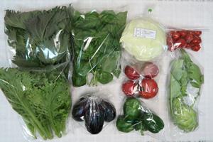 京の野菜セット2020年7月15日の内容