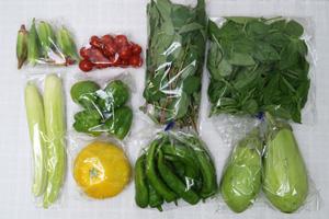 京の野菜セット2020年8月12日の内容