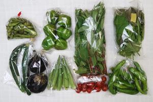 京の野菜セット2020年8月26日の内容
