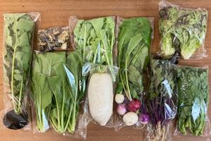 京の野菜セット2020年12月2日の内容