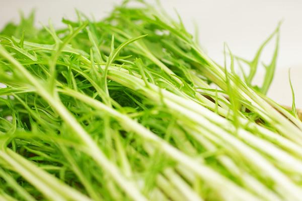 無肥料・自然栽培の水菜