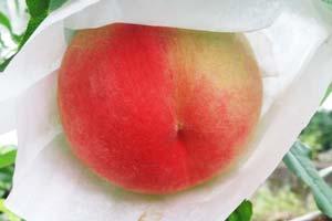 あらかわの桃