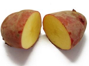 無施肥無農薬栽培の赤馬鈴薯