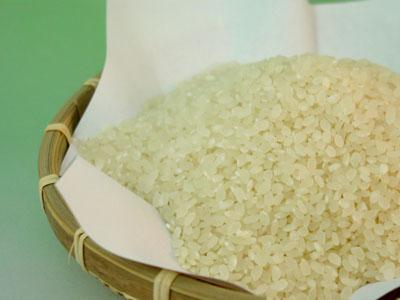 農薬や肥料を一切施さない、とても珍しいお米です。