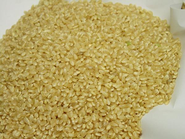 無施肥無農薬栽培天日干しのお米