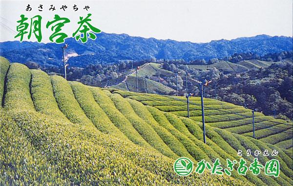 1200年の歴史を持つ朝宮茶