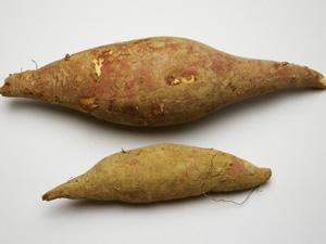 サツマイモの比較