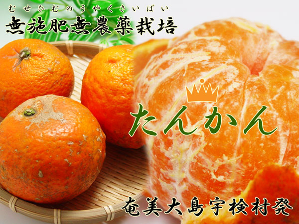 無施肥無農薬栽培「たんかん」奄美大島宇検村発