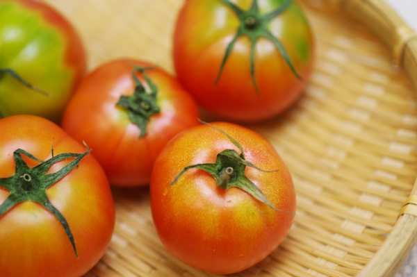 無施肥無農薬栽培トマト