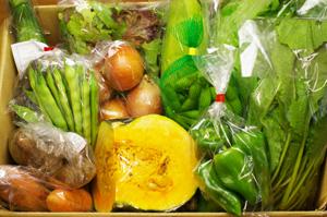 無農薬・無肥料のお野菜セット