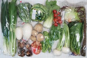2月18日の無施肥無農薬栽培と自然栽培の定期宅配Lセット/大根、小カブ、ジャガイモ(出島)、里芋、ゴボウ、ブロッコリー、レタス、サニーレタス、ほうれん草、青梗菜(チンゲン菜)、小松菜、九条ネギ、菜の花、新生姜、ミニトマト