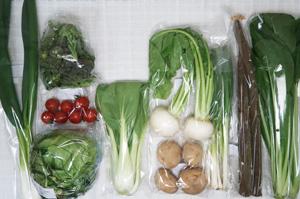 2月18日の無施肥無農薬栽培と自然栽培の定期宅配Mセット/小カブ、ジャガイモ(出島)、ゴボウ、ブロッコリー、レタス、青梗菜(チンゲン菜)、小松菜、九条ネギ、ニンニクの葉、ミニトマト