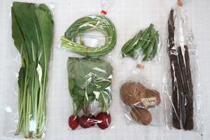 5月5日の無施肥無農薬栽培と自然栽培の定期宅配Sセット/ゴボウ、ジャガイモ(北あかり)、スナップエンドウ、ニンニクの芽、ラディッシュ、小松菜