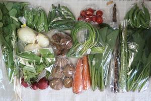 5月12日の無施肥無農薬栽培と自然栽培の定期宅配Lセット/ゴボウ、ニンジン、新玉ねぎ、ジャガイモ(北あかり)、里芋、アスパラ、赤空豆、絹さや、スナップエンドウ、ニンニクの芽、ラディッシュ、大根葉(中抜き葉)、小松菜、ほうれん草、ミニトマト