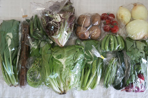 5月19日の無施肥無農薬栽培と自然栽培の定期宅配Lセット/ゴボウ、新玉ねぎ、ジャガイモ(北あかり)、ズッキーニ、ニンニクの芽、赤空豆、大絹さやえんどう、スナップエンドウ、サラダ菜、サニーレタス、インゲン、ラディッシュ、小松菜、しろ菜、ミニトマト