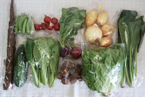 5月19日の無施肥無農薬栽培と自然栽培の定期宅配Mセット/ゴボウ、新玉ねぎ、里芋、ズッキーニ、スナップエンドウ、サラダ菜、ラディッシュ、小松菜、しろ菜、ミニトマト