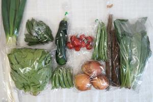 5月22日の無施肥無農薬栽培と自然栽培の定期宅配Mセット/ゴボウ、新玉ねぎ、長ネギ、ズッキーニ、赤空豆、スナップエンドウ、インゲン、サラダ菜、小松菜、ミニトマト