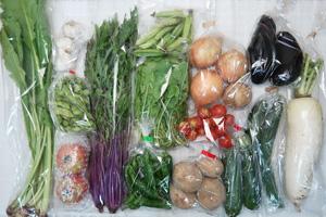 7月7日の無施肥無農薬栽培と自然栽培の定期宅配Lセット/大根、新玉ねぎ、ジャガイモ(西豊)、キュウリ、ズッキーニ、真黒茄子、山科とうがらし、枝豆、うすいえんどう、赤水菜、野沢菜、ルッコラ、ミニトマト、トマト、ニンニク
