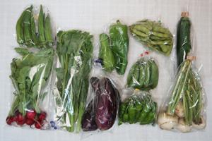 7月14日の無施肥無農薬栽培と自然栽培の定期宅配Mセット/カブ、ズッキーニ、茄子、ピーマン、ししとう、枝豆、スナップエンドウ、オクラ、ツルムラサキ、ラディッシュ