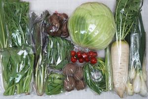 4月9日の無施肥無農薬栽培と自然栽培の定期宅配Lセット/大根、里芋、ジャガイモ(さやあかね)、キャベツ、チコリー、葉玉ねぎ、アスパラ、ニンニクの芽、絹さや、小松菜、水菜、のらぼう菜、高菜の菜の花、ミニトマト