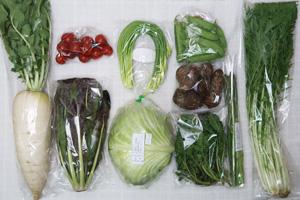 4月9日の無施肥無農薬栽培と自然栽培の定期宅配Mセット/大根、里芋、キャベツ、チコリー、アスパラ、ニンニクの芽、絹さや、水菜、ルッコラの菜の花、ミニトマト