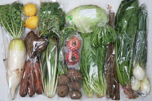 4月13日の無施肥無農薬栽培と自然栽培の定期宅配Lセット/大根、葉玉ねぎ、ゴボウ、里芋、ジャガイモ(さやあかね)、ニンジン、キャベツ、チコリー、ニンニクの芽、スナップエンドウ、水菜、サラダほうれん草、ルッコラの菜の花、レモン、トマト