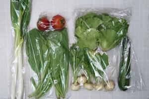 6月4日の無施肥無農薬栽培と自然栽培の定期宅配Sセット/小カブ、ズッキーニ、ロメインレタス、長ネギ、小松菜、トマト