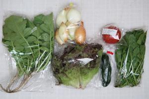 6月11日の無施肥無農薬栽培と自然栽培の定期宅配Sセット/玉ねぎ、ズッキーニ、サニーレタス、大根葉(中抜き葉)、ルッコラ、トマト