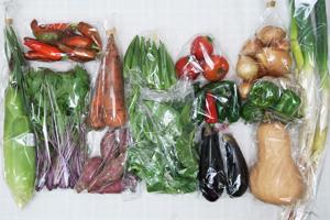 9月10日の無施肥無農薬栽培と自然栽培の定期宅配Lセット/バターナッツカボチャ(1/2)、長ネギ、トウモロコシ、サツマイモ、ニンジン、玉ねぎ、茄子、グリーンパプリカ、鷹ヶ峰とうがらし、ハラペーニョ、オクラ、ツルムラサキ、赤水菜、中玉トマト
