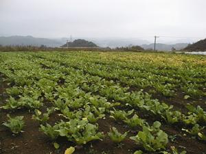 標高650m高冷地のよしま農園