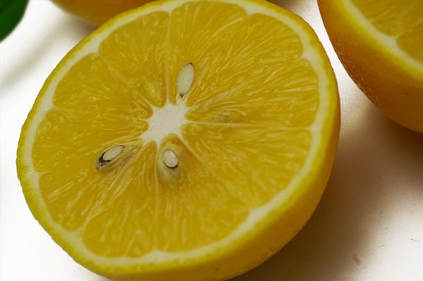無肥料・自然栽培レモン
