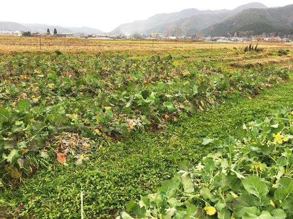 あさひ自然農園の不耕起の畑