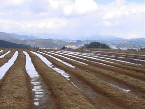 よしま農園の畑