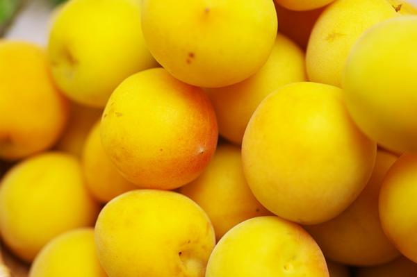 無肥料・自然栽培の改良内田の完熟梅