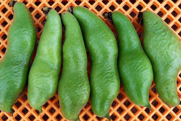 無肥料・自然栽培ポトンファームのそら豆