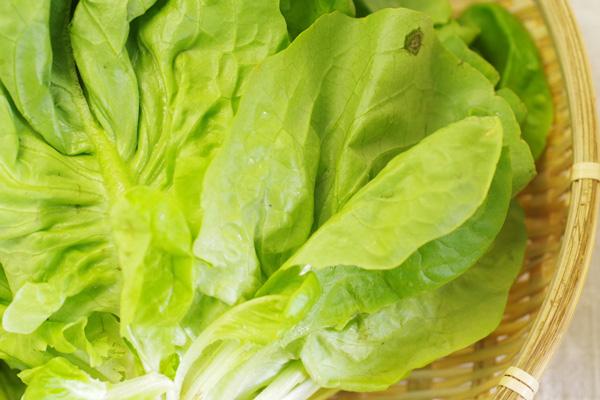 無肥料・自然栽培サラダ菜