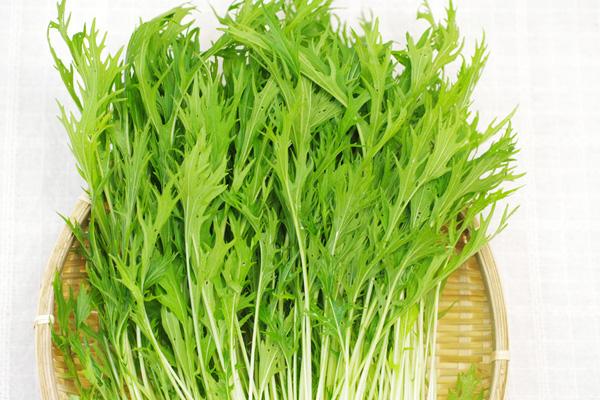 無肥料・自然栽培佐伯遼平さんのサラダ水菜