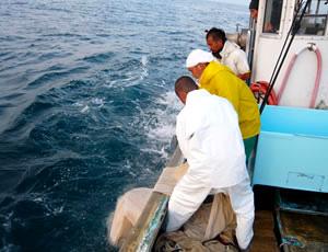 網を引き揚げる