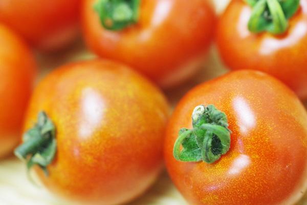 無肥料・自然栽培すばる農園のミディトマト